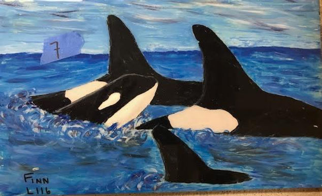 L116 Finn  was born in October 2010 into the tight knit L Pod family of the Southern Resident Orca Whales. The Southern Resident clan is made up of three pods; L, J and K. The L  Pod is the largest of the three at approx. 33. The oldest of the clan is estimated to have been born in 1928, L125. Wow! Finn was his Mama's (Kasatka L82, born 1990)  first calf.  Kasatka,  Finn's  Grandma (Nugget L55), Aunts (Lapis L103) (Jade L118) and Uncle (Takoda L109) provide him with lots of love and support. He also has a younger cousin to play with (Lazuli L123- calf of Lapis).   I like to imagine Finn, as shown in the tile painting, feeling safe and surrounded by love.  While reading of his sightings, I was gushing with pride at his cheeky playfulness. He was witnessed  wrestling with his young pod mates  (2012) and was seen doing his inverted tail slaps and  breeching over and over again (2013).  His spinning spy hop was unforgettable for one witness.  His most recent sighting was Jan 2020, where he was spotted off Race Rocks doing dives of approx 5 minutes with his group. Close by was his Mama Kasatka and Uncle Takoda.  Orcas have been known to dive down to 800 ft in the Salish Sea. Holy Orca that's deep! Live long and strong Finn.