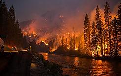 fire-forest-wallpaper-preview.jpg