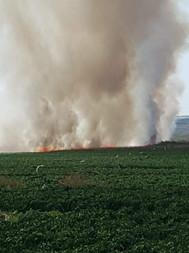 שריפה מבלון תבערה בשדות קיבוץ כפר עזה