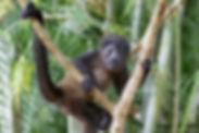 Refuge for Wildlife-37.jpg