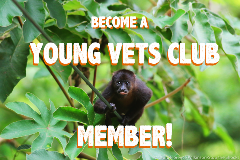 becomeayoungvetsclubmember].png