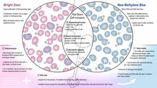 Routine Blood Staining