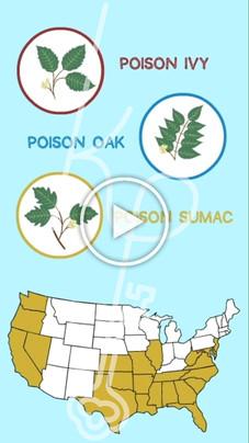 Poisonous Plants: No Pack? No Problem!
