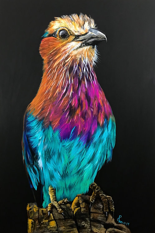 Lilac Breasted Roller Portrait