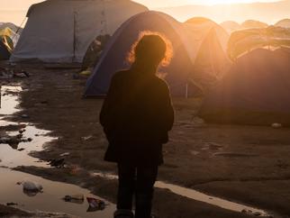"Harvard Law School Report: ""Fulfilling U.S. Commitment to Refugee Resettlement"""