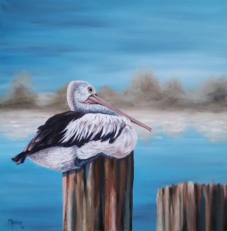 SOLD - Pelican