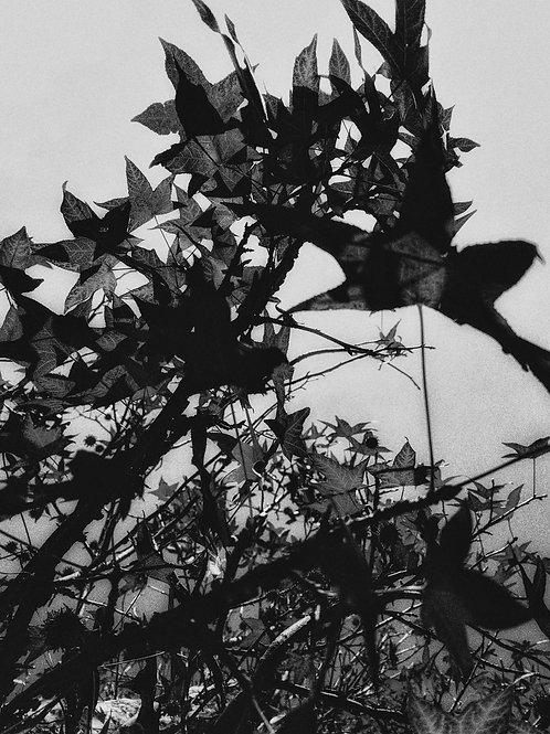 Fall in Monochrome