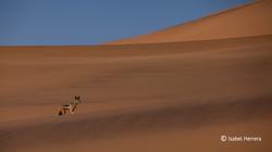 Namibia_Wueste_01