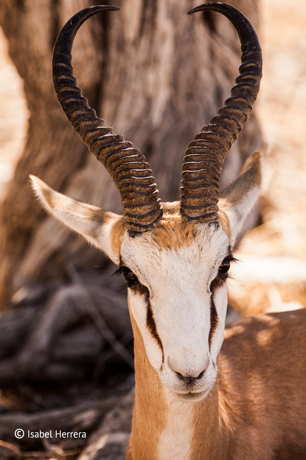Namibia_Springbook_02