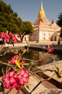 Bagan_Ananda_Tempel