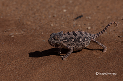 Namibia_Wueste_03