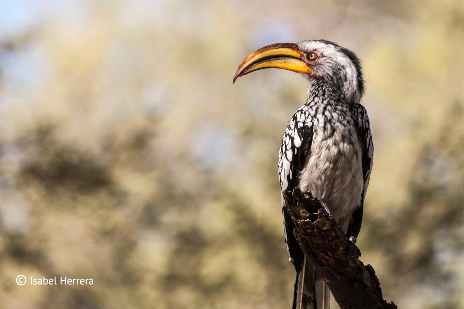 Namibia_Vogel_01