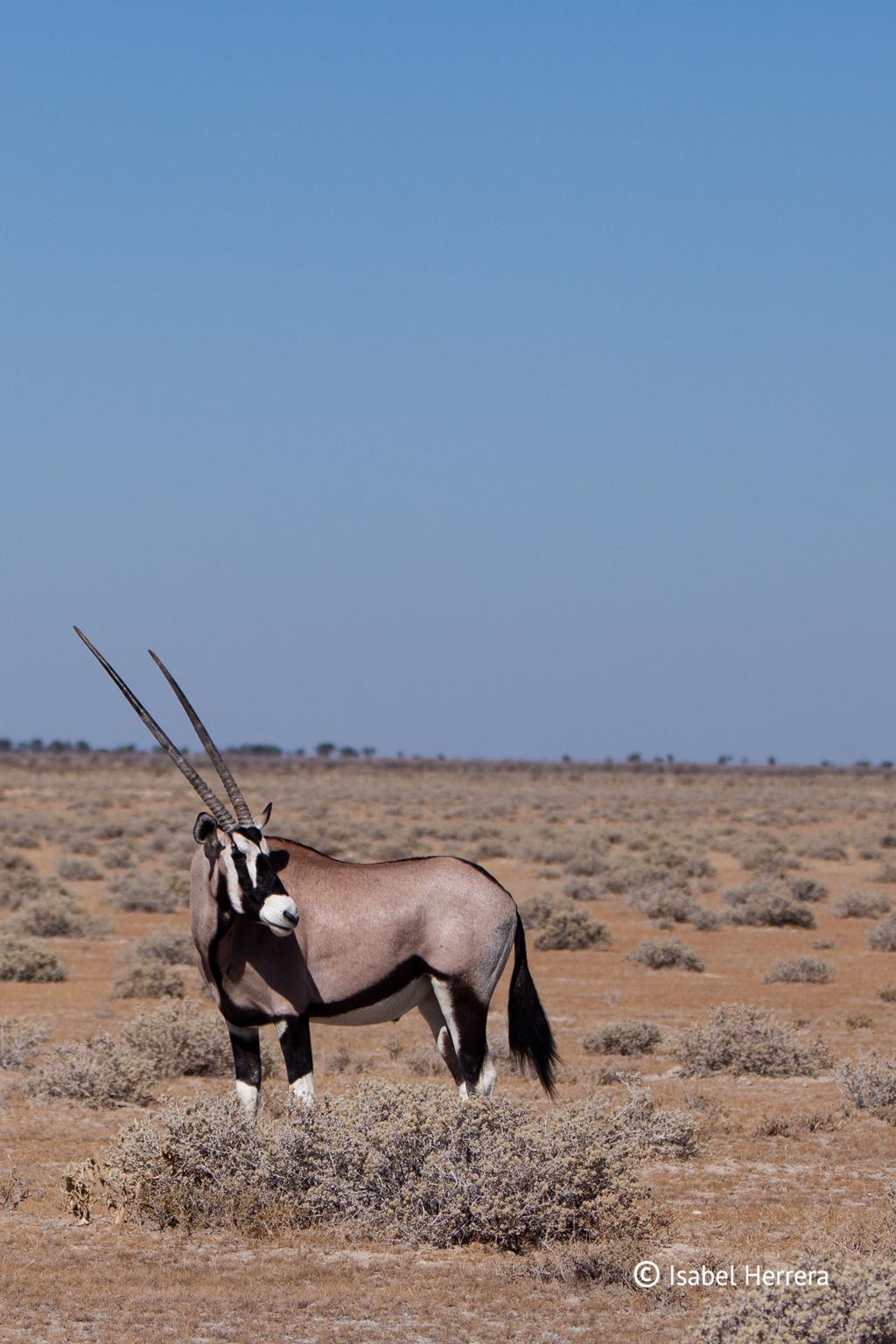 Namibia_xxx_07
