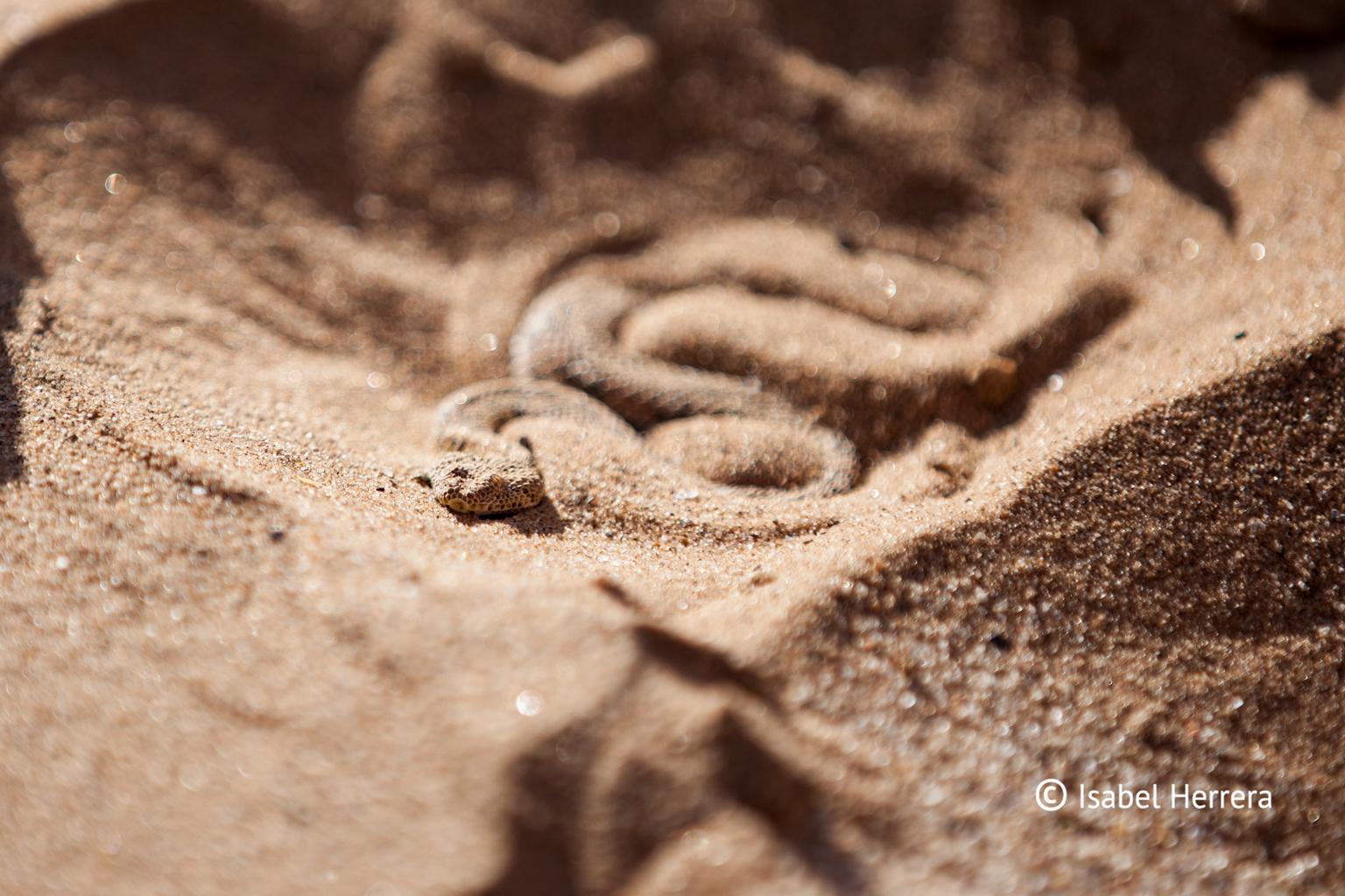 Namibia_Schlange_02