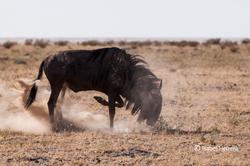 Namibia_xxx_01