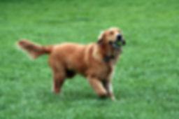 Dog Physio Remedial Exercise