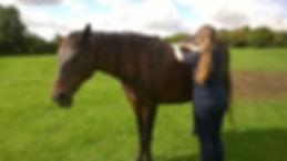 Horse Massage Physioterapy Maintenance Hampshire
