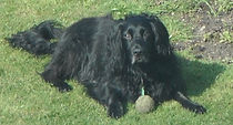 Canine Dog Physiotherapy Hamshire