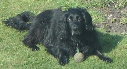 Dog Physiotherapy Rehabilitation