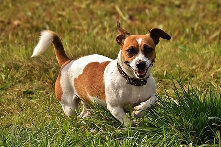Dog Rehab Physio Exercise Hampshire