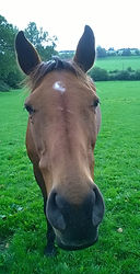 Equine Horse Physiotherapy Hampshire