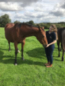 Horse Physio Physiotherapy Physiotherapist Hampshire