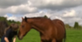 Horse Physiotherapy Rehabilitation