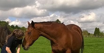 Horse Physiotherapy Rehabilitation