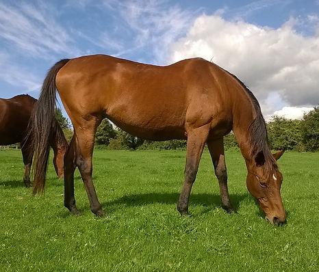 Horse Physio Rehab Maintenance Perfomance