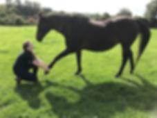 Horse Stretching Maintenance Physio Rehabilitation Hampshire