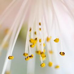 Bloom.webp