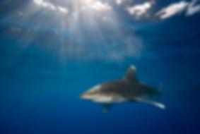Photos and Digital Art | Aqualifephotos.com
