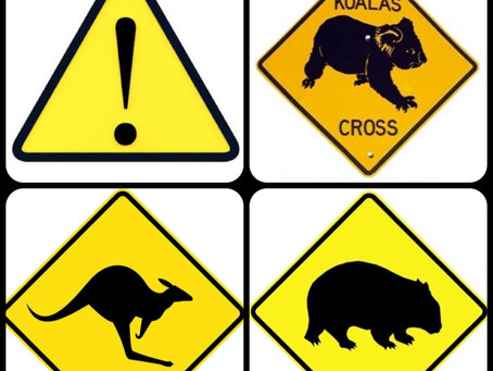 Australian Wildlife & Road Safety