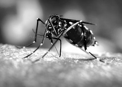 macro_mosquito_skin_hand_sucks_blood_hd-