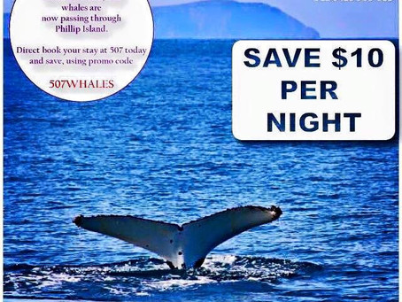 Whale Watching Offer Rate - Ends Soon!