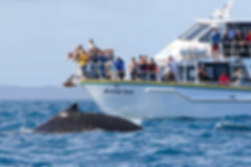 wildlife coast cruises whale watching.PN