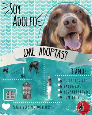 Adolfo.png