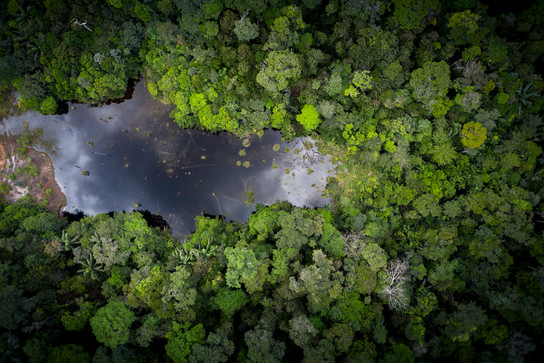 Marais en forêt humide.jpg