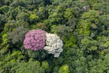 Ebènes en fleurs.jpg