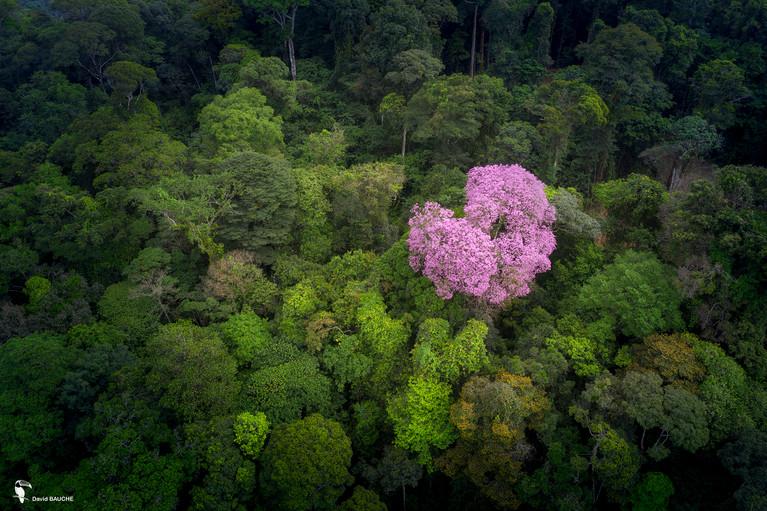 Ebène rose.jpg