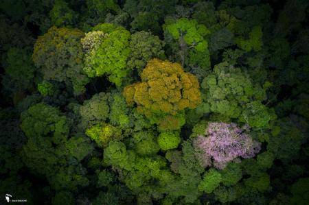 Patcwork d'arbres en fleur.jpg
