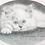 """Thumbnail: """"MALLOW"""" Prints by Jacqueline Brown"""