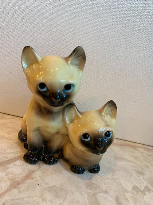 Blue eyes; Siamese Pair; Posing Kittens