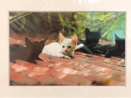 LISI PRINT stray kittens