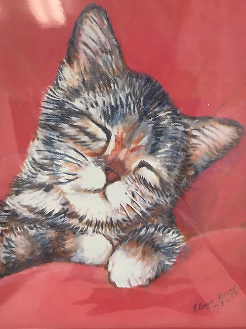 CATS ELIZA CORAL PRINT  sleepy in red