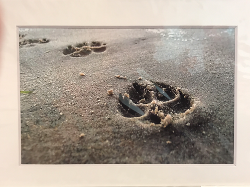 LISI PRINT -paw prints in sand