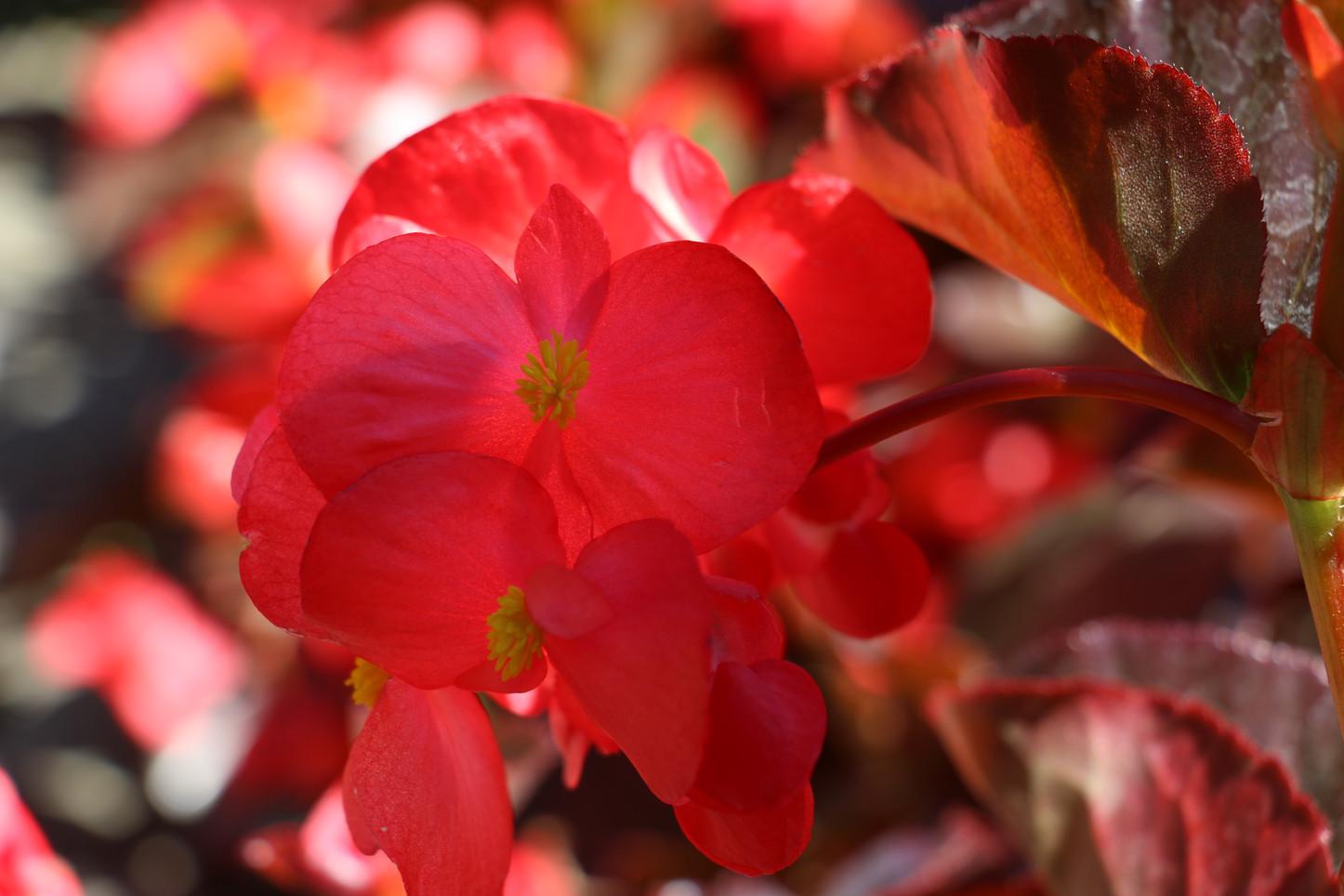 Angeli Ramirez, Flowers