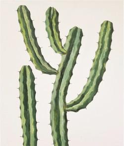 Cactus8-1