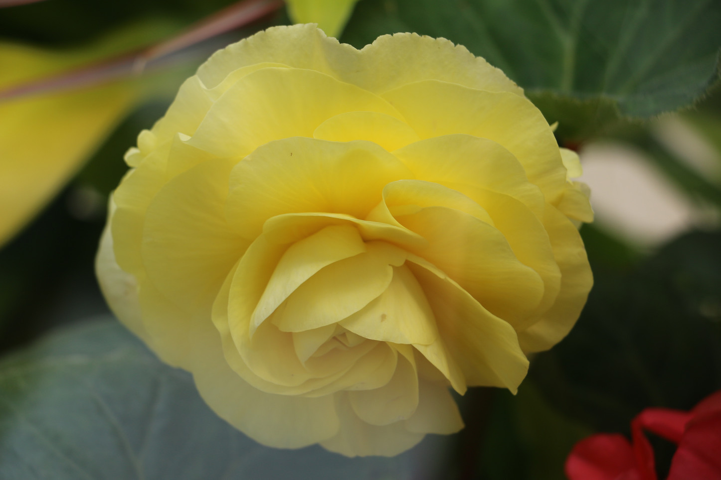 RayMan, Yellow #1
