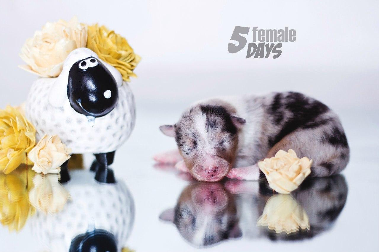 5 дней